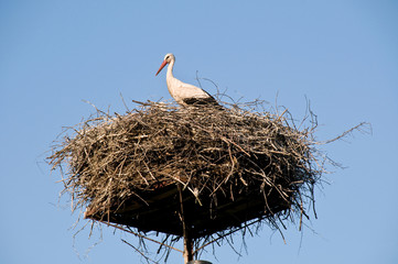 Stork Nest in Eastern Poland