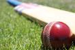 Cricket equipment. - 11253494
