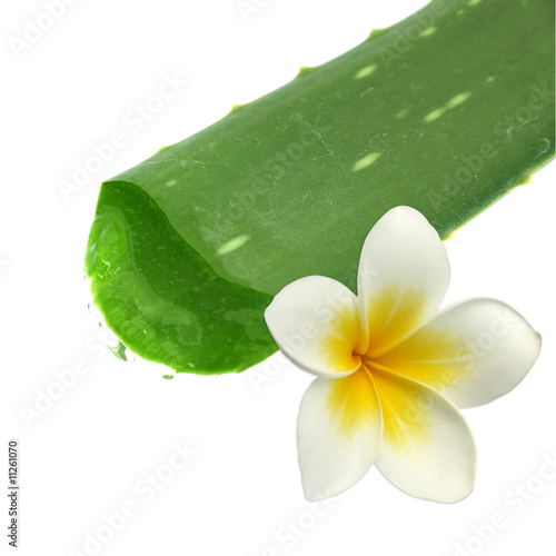 Feuille d 39 aloe vera et fleur de frangipanier photo libre - Fleur d aloe vera ...