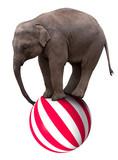Baby elephant on ball - Fine Art prints
