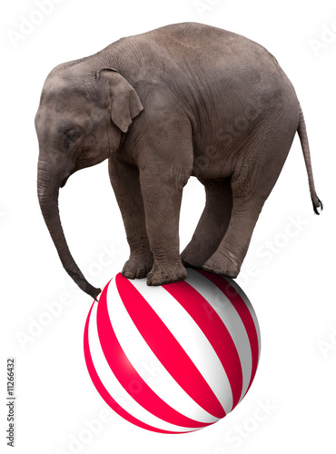 Tuinposter Olifant Baby elephant on ball