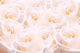 Pale pink roses. poster