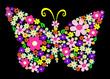 Quadro spring flower butterfly vector illustration