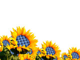Fototapety girasole solare