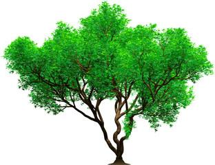 3d tree platan green