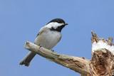 Bird On A Snowy Stump In Winter poster