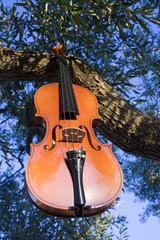 Violin tree