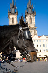 Carriage Horses in Prague Old Town Square
