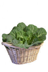 Basket of Collard Greens