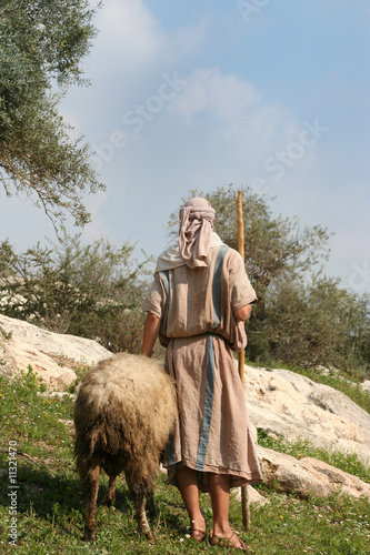Papiers peints Sheep Nazareth Shepherd