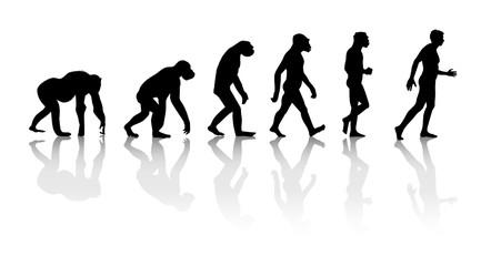 Darwin - Théorie de l'évolution singe homme