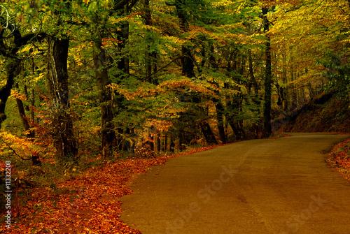 path - 11332208