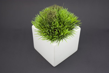 White vase with grass