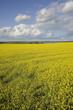 fall farm fields in rural Manitoba