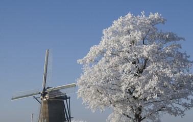 Windmill and white tree