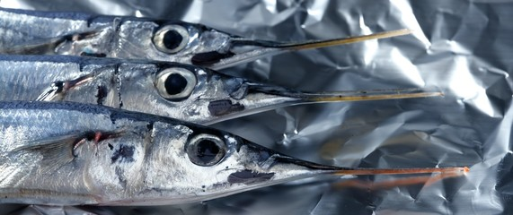 three needle fish, uncooked macro studio shot