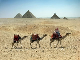 camels caravan in desert near pyramid in the Egypt,Cairo,Giza