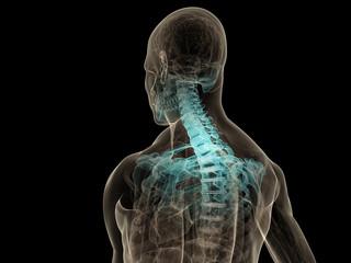 hervorgehobenes nackenskelett