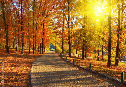 Autumn in the park - 11365887