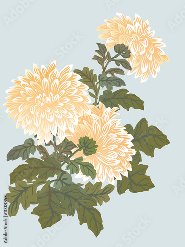 yellow chrysanthemum illustration