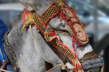 Donkey at Mijas. Spain