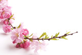 pink branch isolated on white