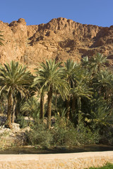 The Todra Gorge oasis