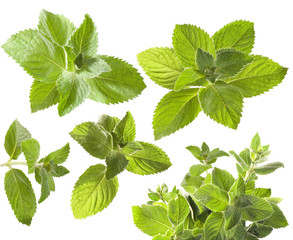 Green mint leaves isolated on white