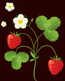 Wild strawberry bush