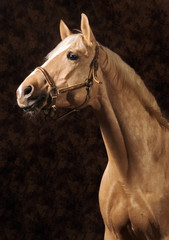 Creamy horse