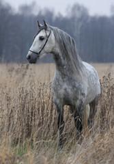 Grey horse on field