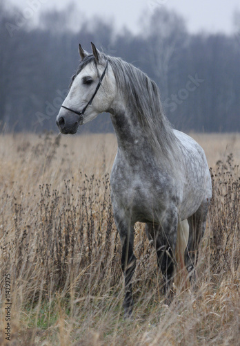Grey horse on field