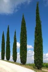 Zypresse Allee Wanderweg vor blauem Himmel,Toskana,Italien