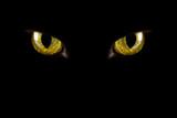 Fototapeta oko - wszyscy - Zwierzę domowe