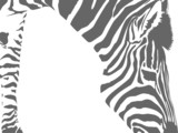 zebra motif background with copy space poster