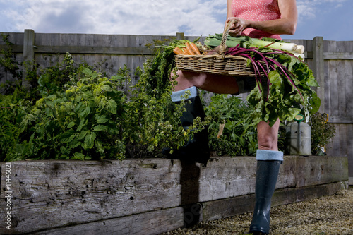 Low section of woman standing in organic garden with basket of vegetables