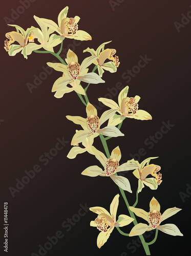 yellow orchid flowers on brown
