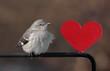 Mockingbird With A Heart