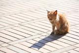 Sick and poor kitten poster