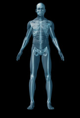 Skeleton human on black background