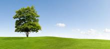 "Постер, картина, фотообои ""Maple tree"""
