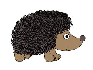 Hedgehog - Isolated On White