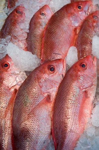 Red fish in chinese supermarket in Queens, NY