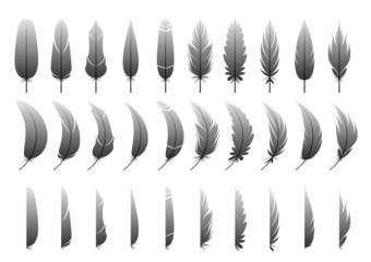 Variation of the feather