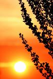 Fantastic sunset background poster