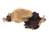 Edible Dried Fungi Macro poster