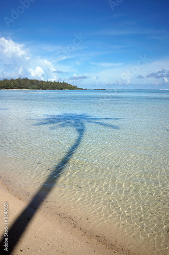 Palm tree reflection in Water, Moorea French Polynesia