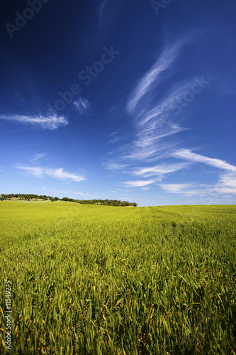 beatiful spring landscape with grass and sky