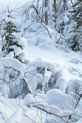 winter landscape / snow forest