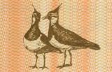 Pair of Eurasian Lapwings poster